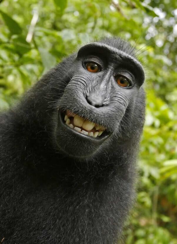 Monkey self-portrait