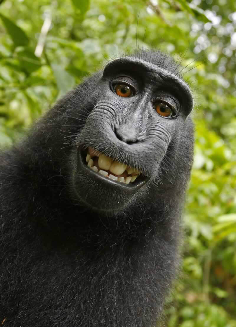 settlement reached monkey selfie case broke new ground for animal