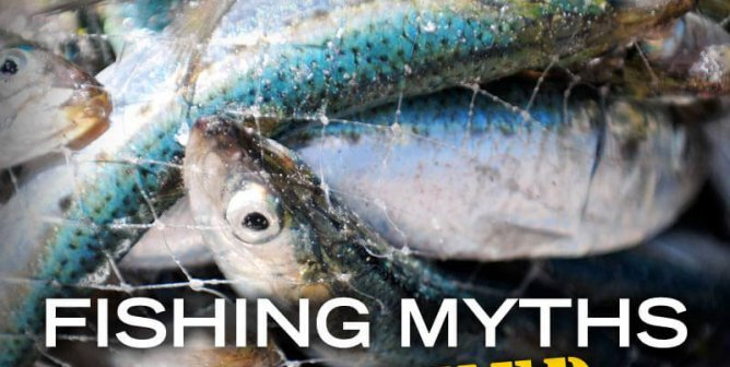 You'll Never Go Fishing After Reading This