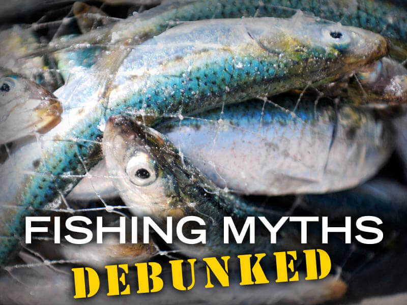 You'll Never Go Fishing After Reading This   PETA
