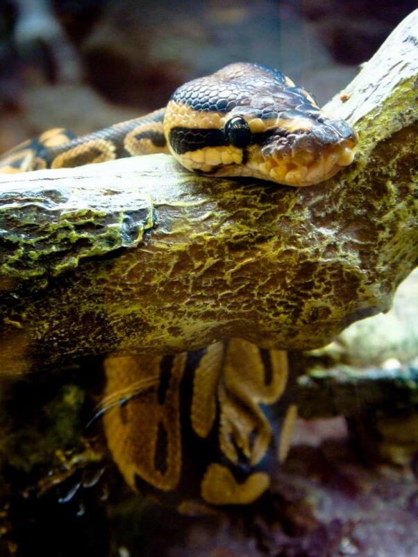 Serpent dans l'animalerie 2