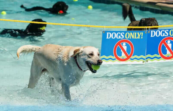 Public Swimming Pool Goes To The Dogs Peta