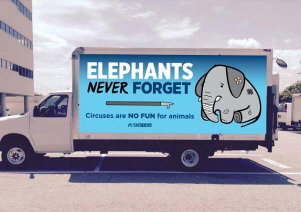 Mock-up of elephant car wrap