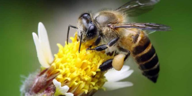Planting Flowers to Help Bees Is Great—but You Can Do More