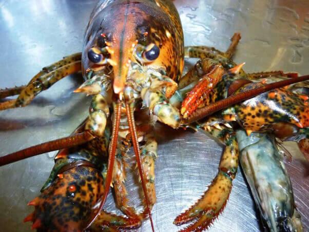 lobster-liberation-emotive-lobster