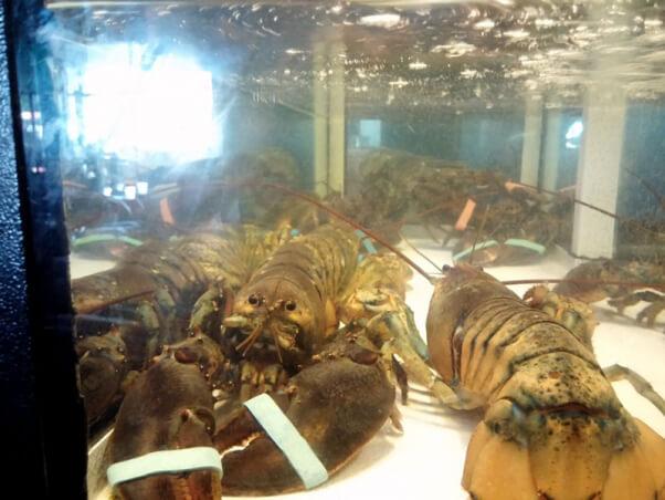 lobster-liberation-lobster-tank
