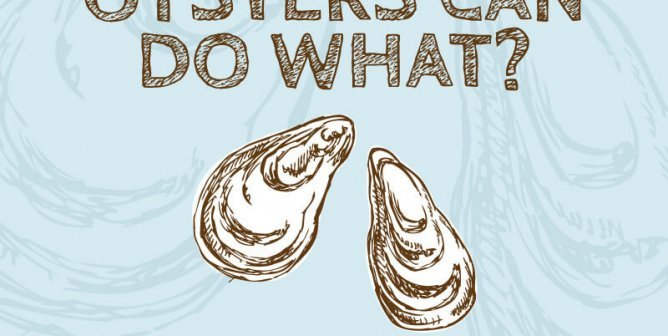 Oysters Can Do What?! 10 Great Reasons to Let Bivalves Live