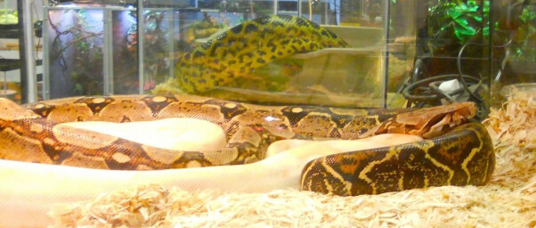 serpent en animalerie