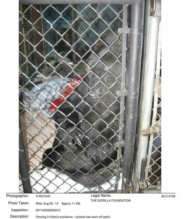 Photo of Koko from 2014 USDA Inspection