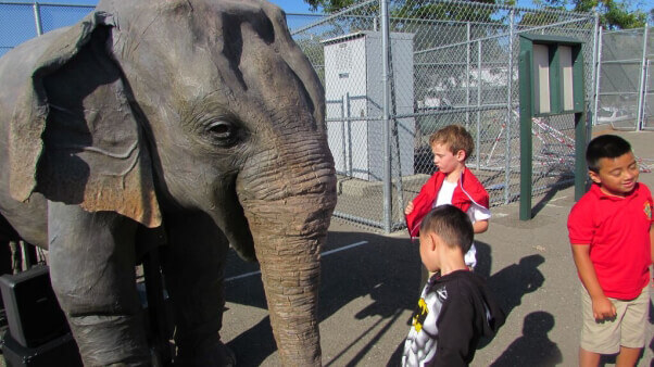 Ellie, PETA's life-size robotic elephant