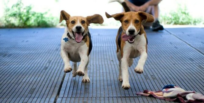 Brazil Latest Country to Halt Deadly Yearlong Poisoning Test on Dogs