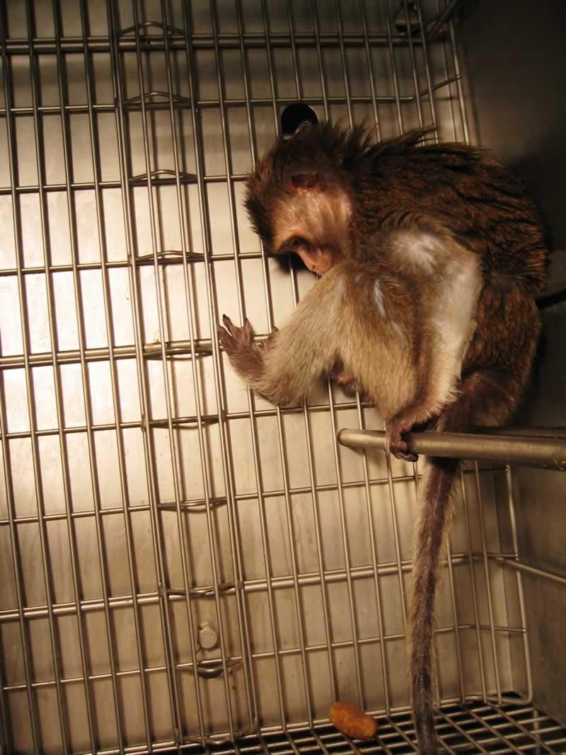 PETA debunking wanprc lies