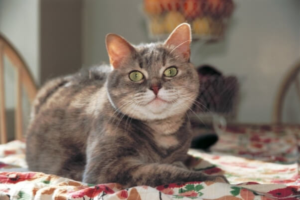 Emmie the Cat