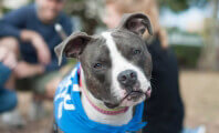 Eat, Drink, and Be Caring at the Spring Adopt-a-Thon