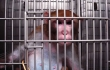 USDA Files Lawsuit Against Monkey Experimenter Over Horrific Animal Deaths