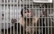 UW-Madison's Primate Laboratory Under Federal Investigation. Again.