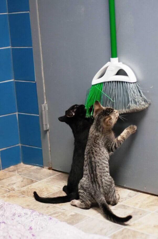 Ninja turtle kittens_11.15_08