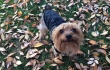 Dogs in Leaves: Instant Happiness Guaranteed