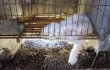 You Won't Believe What We Found On Angora Farms Deemed 'Humane'