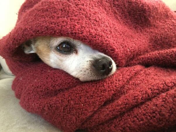 dog-blanket-take-your-dog-to-restaurants