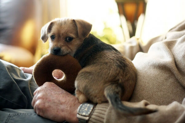 doggy-with-donut-toy-take-your-dog-to-restaurant