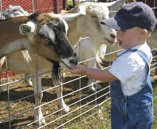Young child at petting zoo