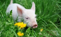 Great News! No More Animals Used in U.S. or Canadian Medical Training