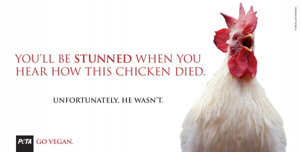 You'll Be Stunned When You Hear How This Chicken Died billboard