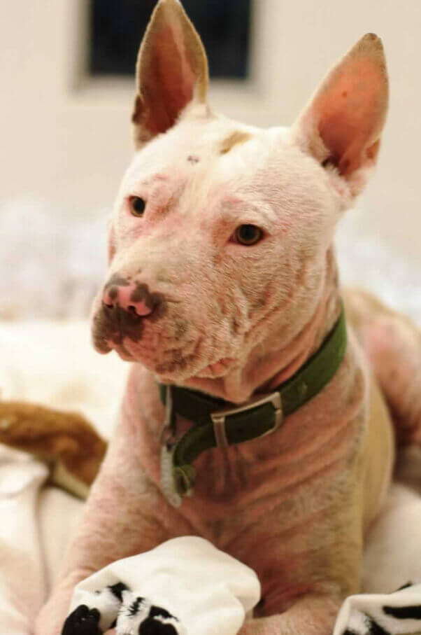 Pinky, a dog available for adoption
