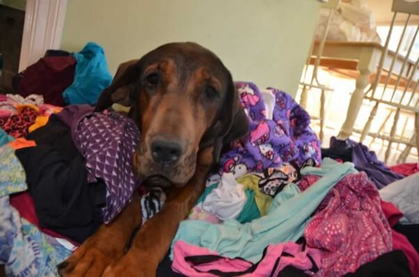 Sarah laundry