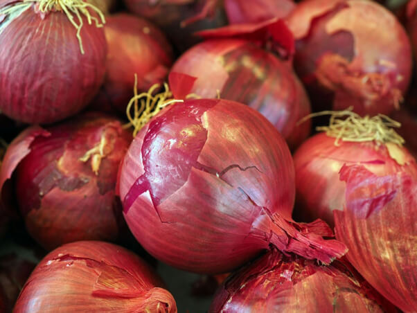 holiday-foods-that-are-bad-for-dogs-onions