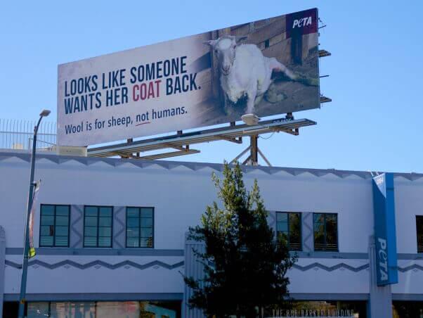Anti-wool billboard above PETA's Los Angeles headquarters