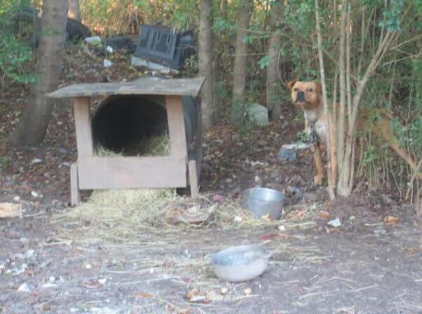 overturned barrel as doghouse