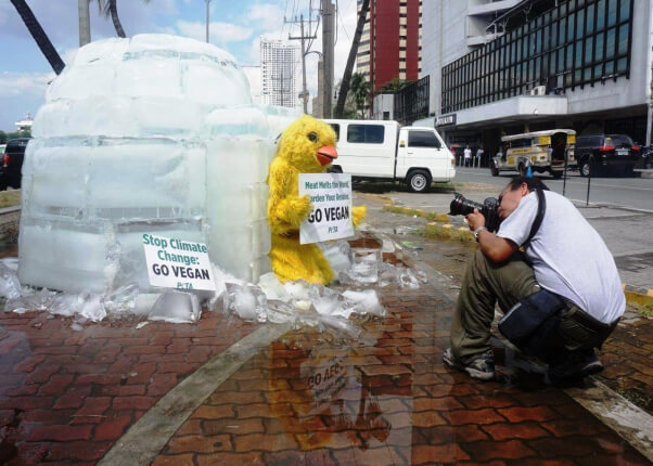 PETA Asia Pacific igloo demo