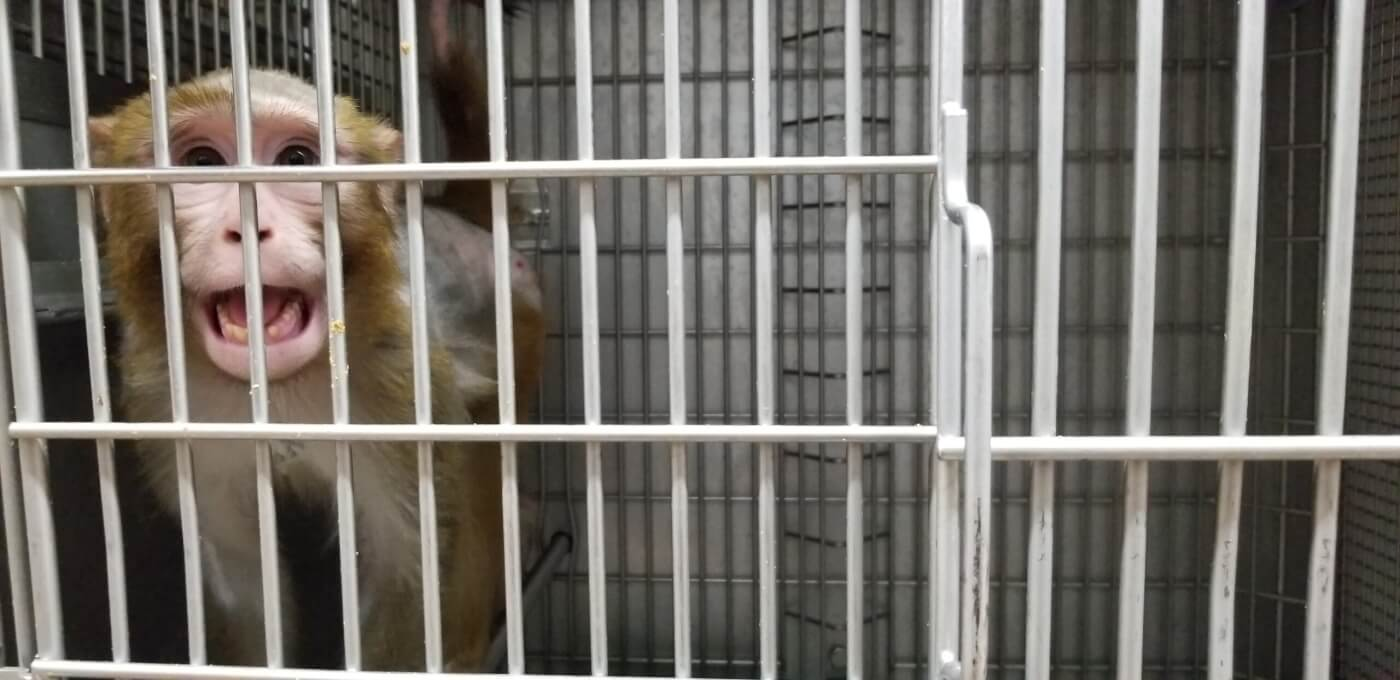 10 worst things happening to animals - experiments on primates