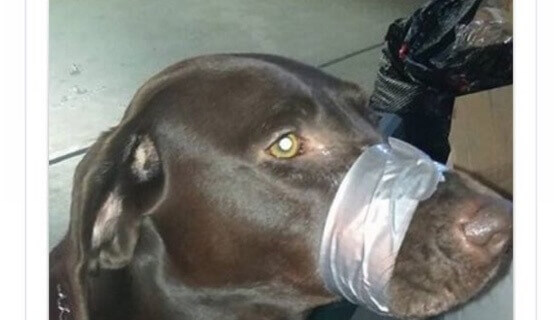 Doggie duct tape duct tape Facebook post dog