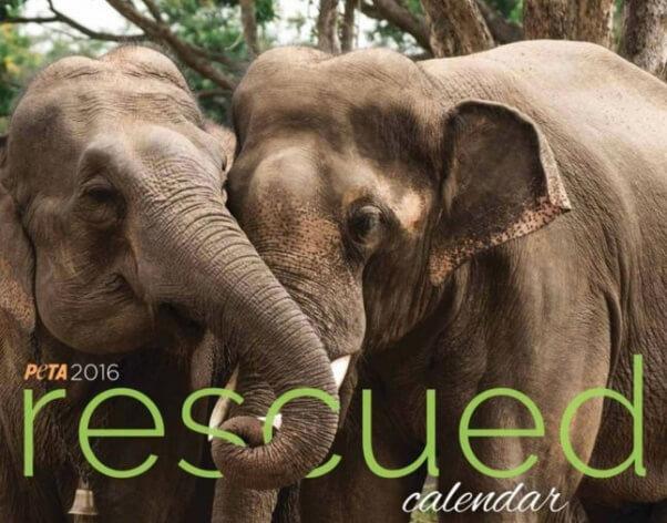 Elephant Rescue Calendar