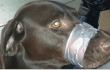 Shocking Photograph of Dog's Mouth Taped Shut Prompts PETA Action