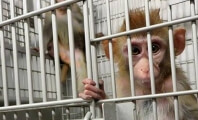 Jane Velez-Mitchell Goes After Florida's Cruel Monkey Dealers