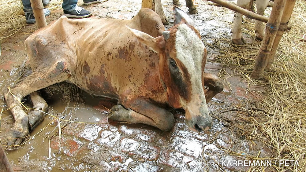 The Leather Industry Peta