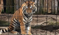 Bowmanville Zoo to Close its Doors