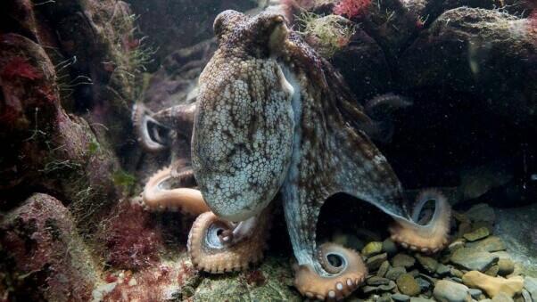large-octopus-kraken-deep-sea-ocean