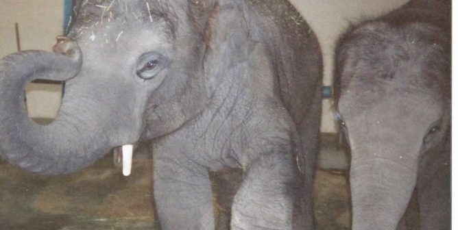 Another Baby Elephant Dies at Ringling's 'Retirement' Center