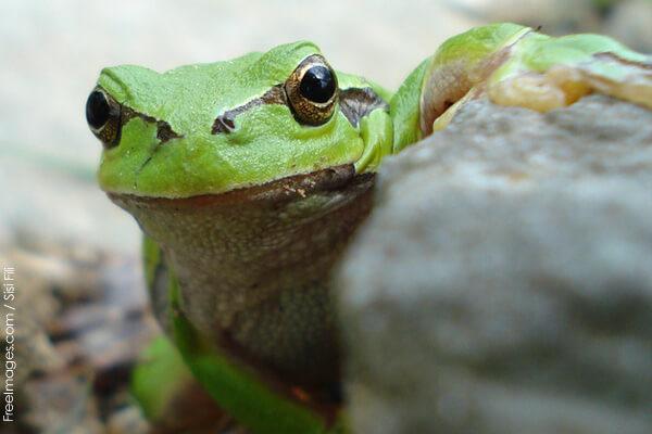 frog eaten alive in disturbing viral video peta
