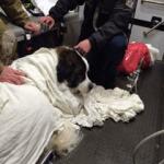 Fairfax County Dog Rescue