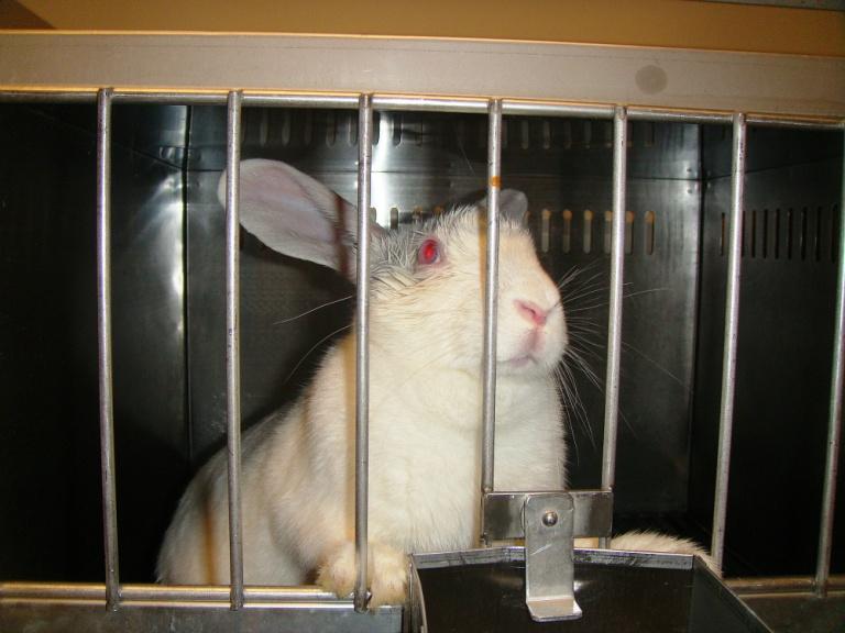 Rabbit Utah 3