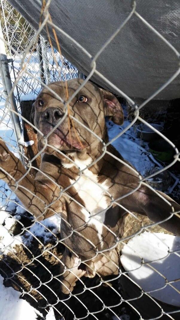 Polo, a dog kept in a pen