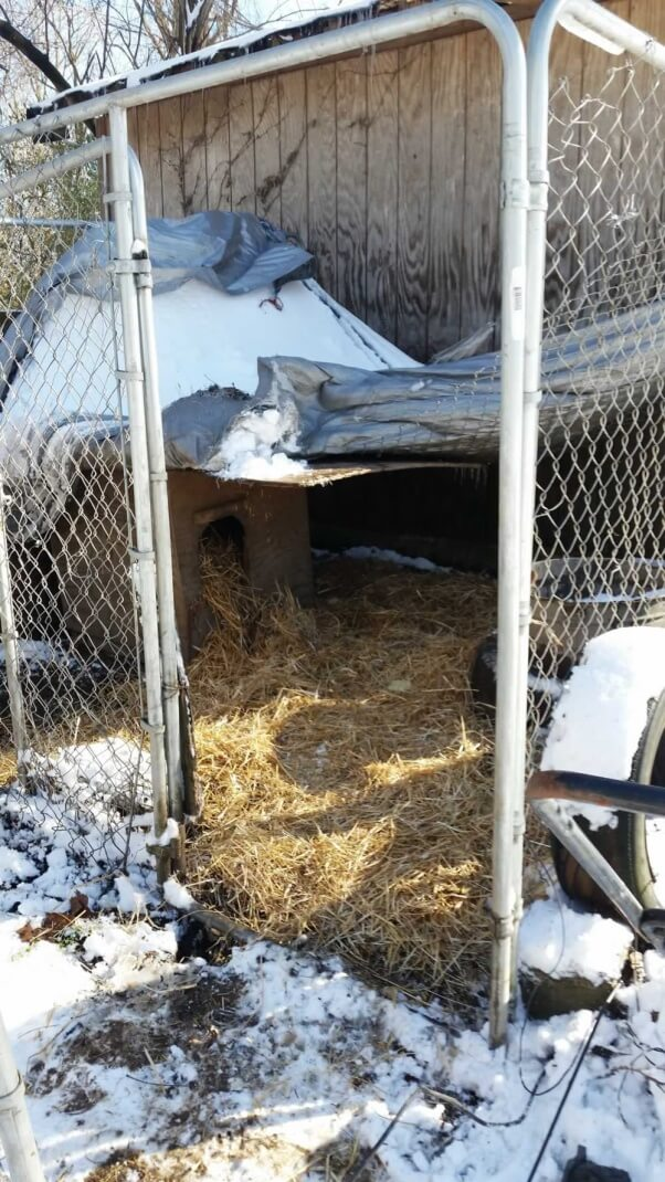 Polo's pen with fresh straw and tarp pulled back