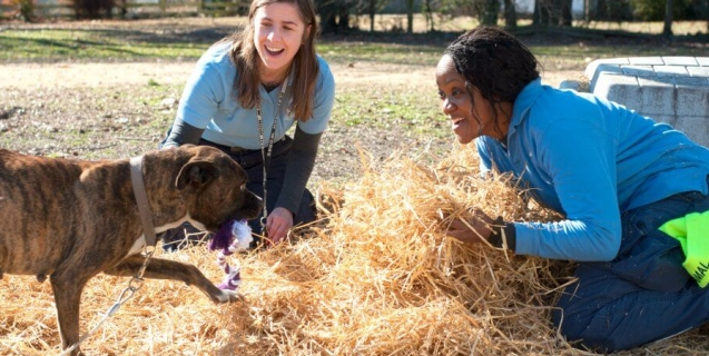 Meet PETA's Rescue Team and the Animals They Help