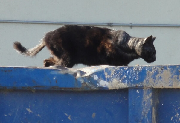 stray cat on dumpster